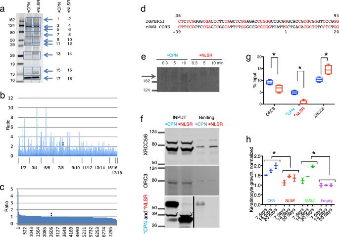 Lysine-specific demethylase 2A enhances binding of various nuclear