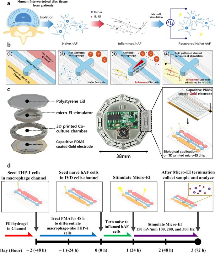 Electrical Impulse Effects On Degenerative Human Annulus Fibrosus Model To Reduce Disc Pain Using Micro Electrical Impulse On A Chip Scientific Reports