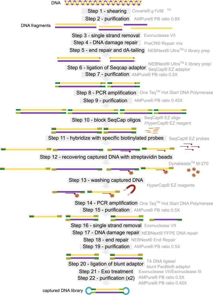 Large Enriched Fragment Targeted Sequencing (LEFT-SEQ) Applied to