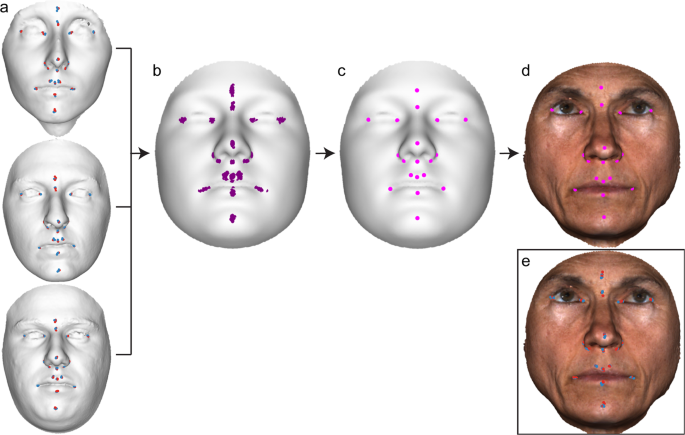 MeshMonk: Open-source large-scale intensive 3D phenotyping