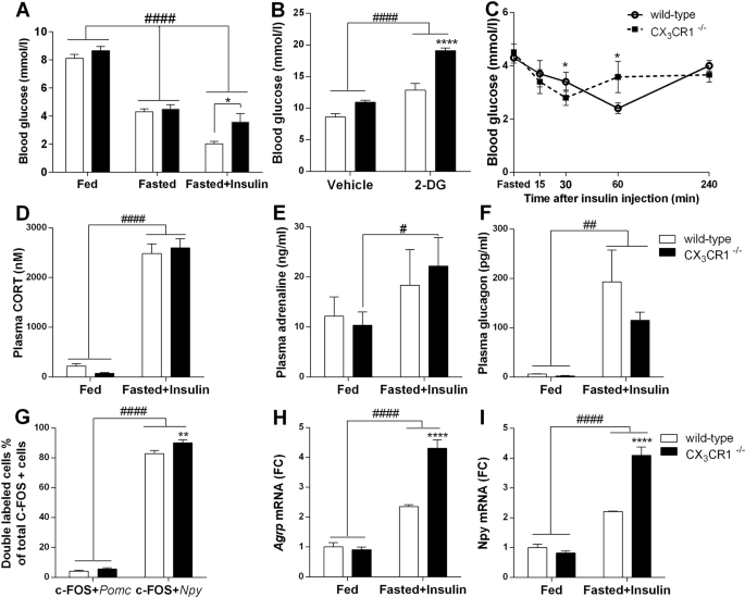 Hypoglycemia-activated Hypothalamic Microglia Impairs