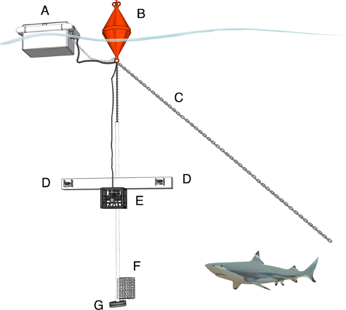 The effect of underwater sounds on shark behaviour | Scientific Reports