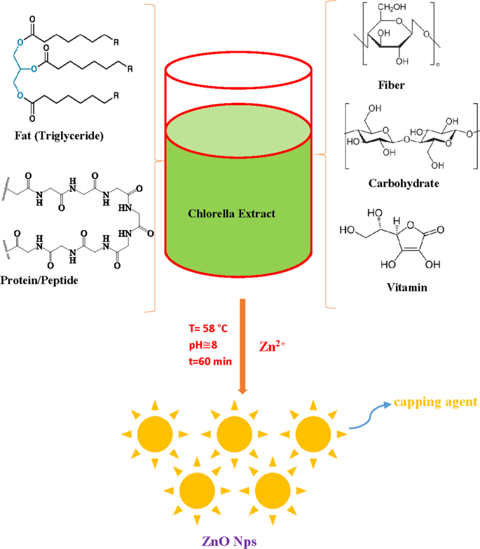Phycosynthesis and Enhanced Photocatalytic Activity of Zinc
