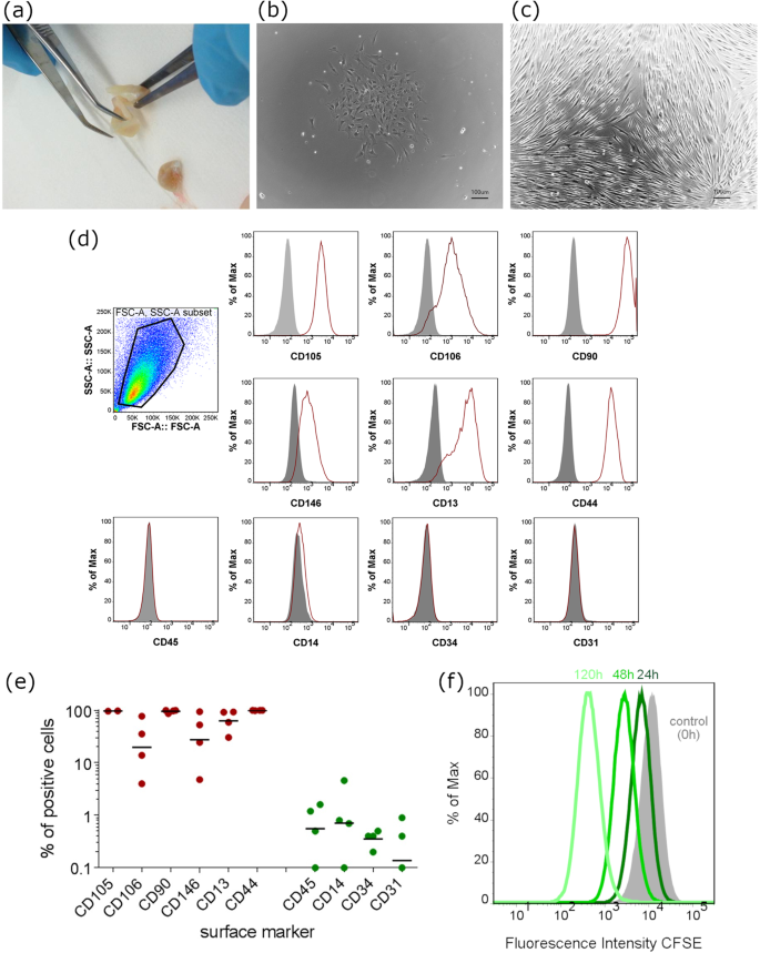 Emulating the early phases of human tooth development in