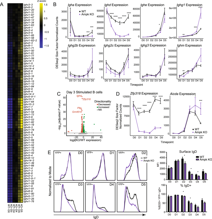 Ampk regulates IgD expression but not energy stress with B cell