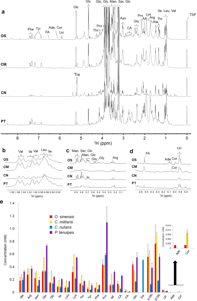 Metabolic profiling of natural and cultured Cordyceps by NMR