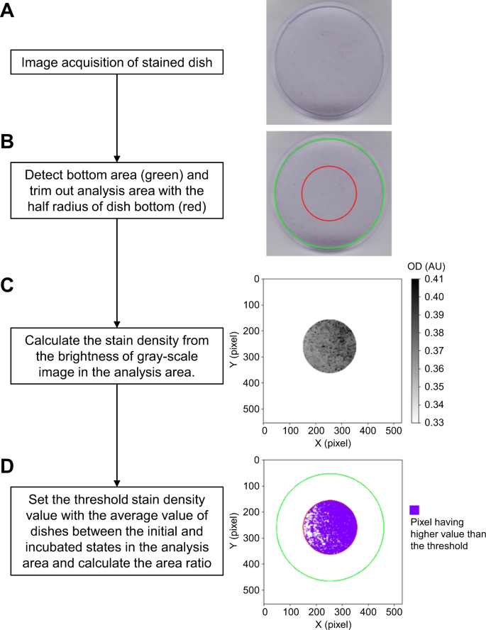 In-situ detection based on the biofilm hydrophilicity for