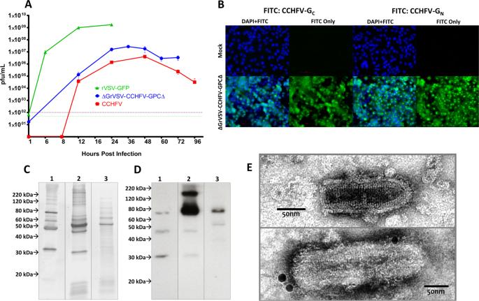 Vesicular Stomatitis Virus-Based Vaccine Protects Mice
