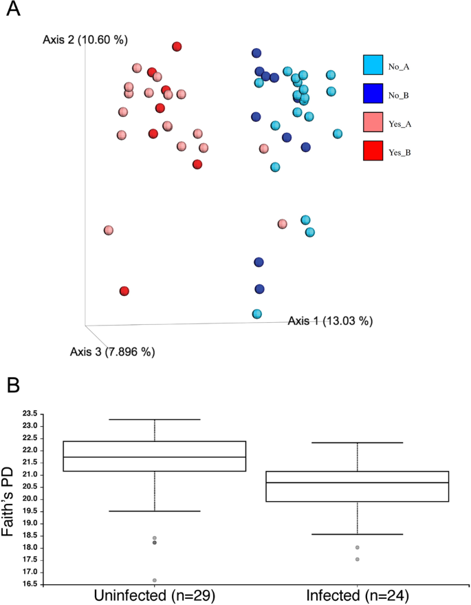 Cognitive and Microbiome Impacts of Experimental Ancylostoma