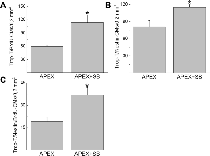 b20d8f09a097 Quantitative assessment of cell cycle re-entry of NNVMs and nestin(+)-NNVMs  residing selectively adjacent to the fibrin clot region of the  apex-resected ...
