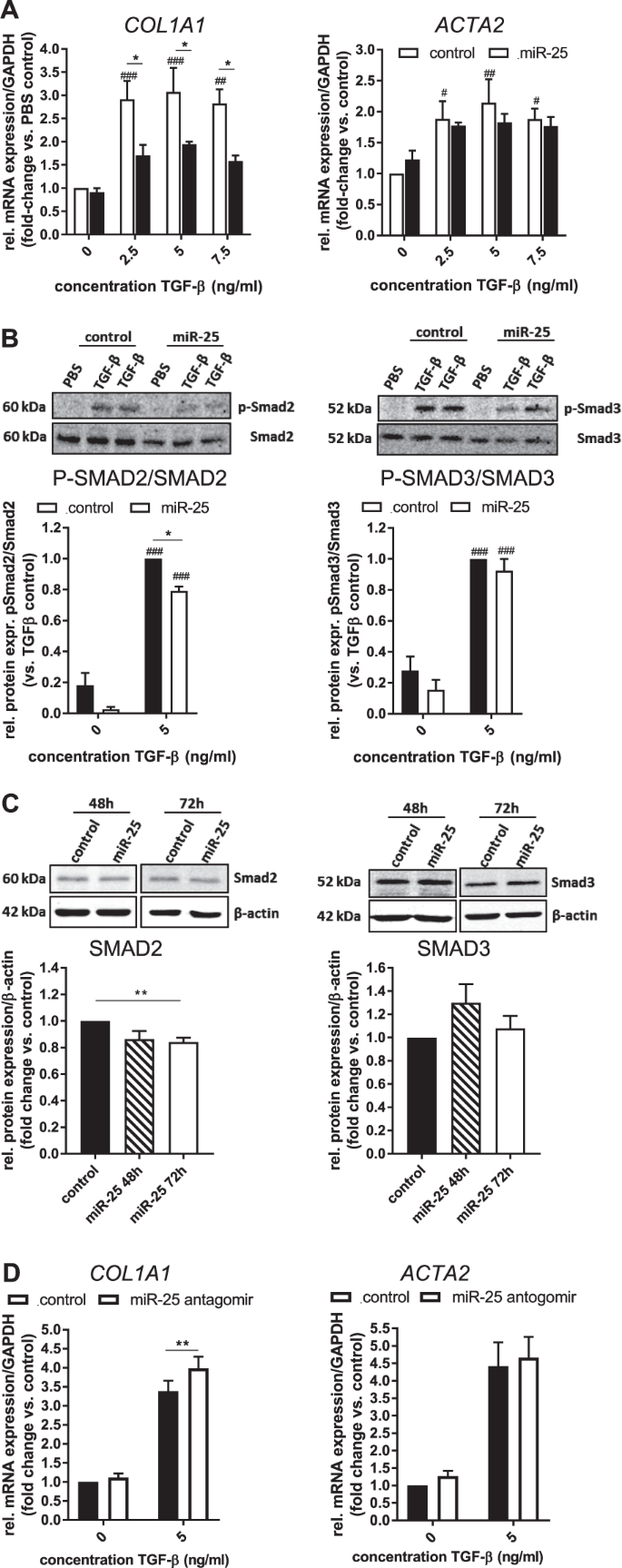 Overexpression of miRNA-25-3p inhibits Notch1 signaling and TGF-β