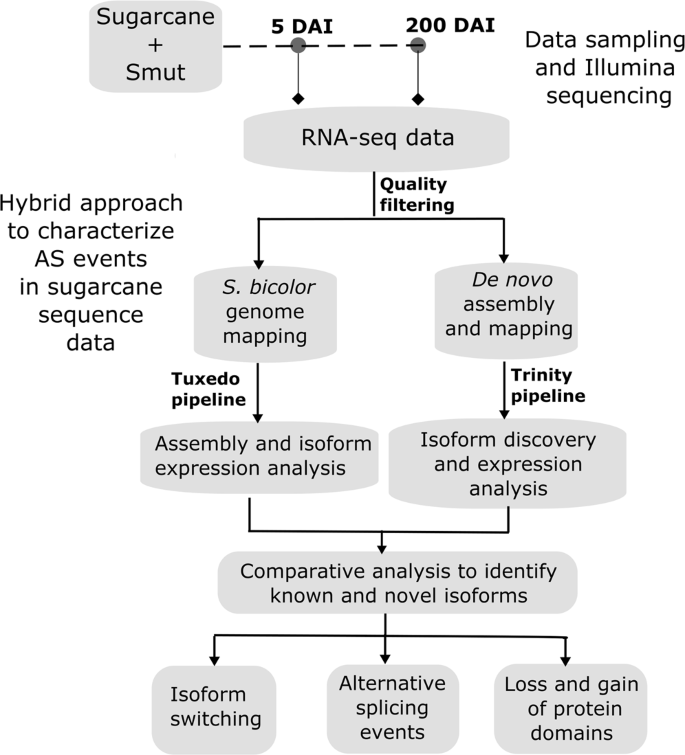 Genome-wide alternative splicing landscapes modulated by