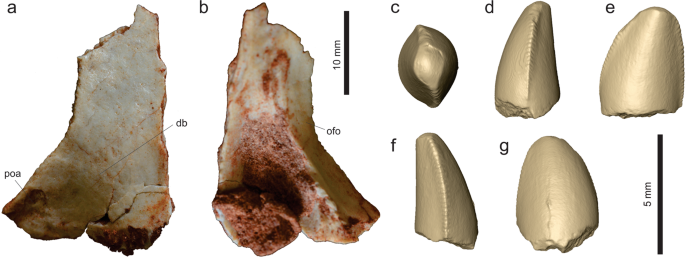 A new desert-dwelling dinosaur (Theropoda, Noasaurinae) from the