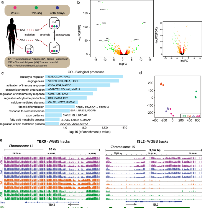 Methylome and transcriptome maps of human visceral and subcutaneous ad