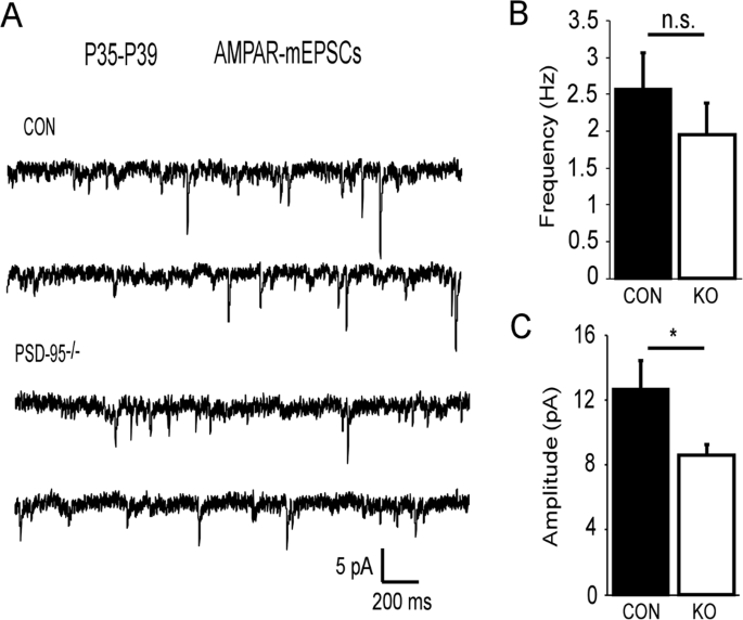 PSD-95 deficiency disrupts PFC-associated function and behavior
