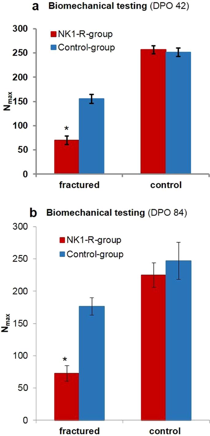 Effect of neurokinin-1-receptor blockage on fracture healing
