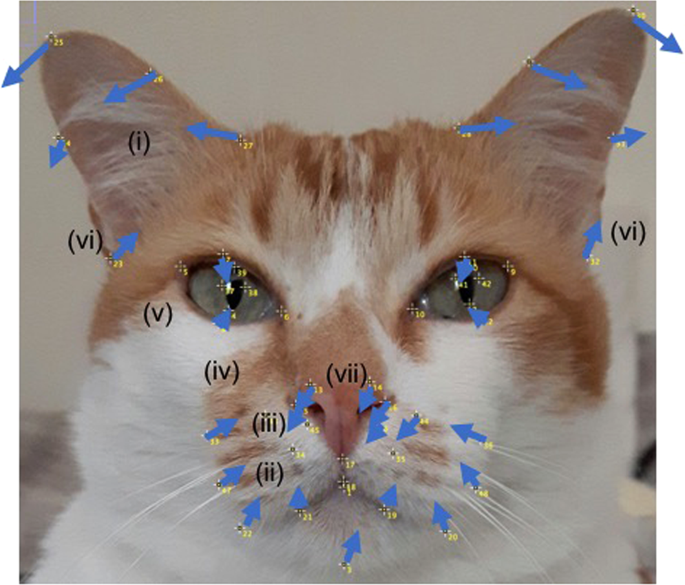 Geometric morphometrics for the study of facial expressions