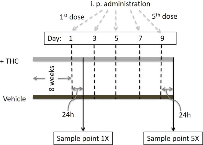 Acute and short-term administrations of delta-9-tetrahydrocannabinol m