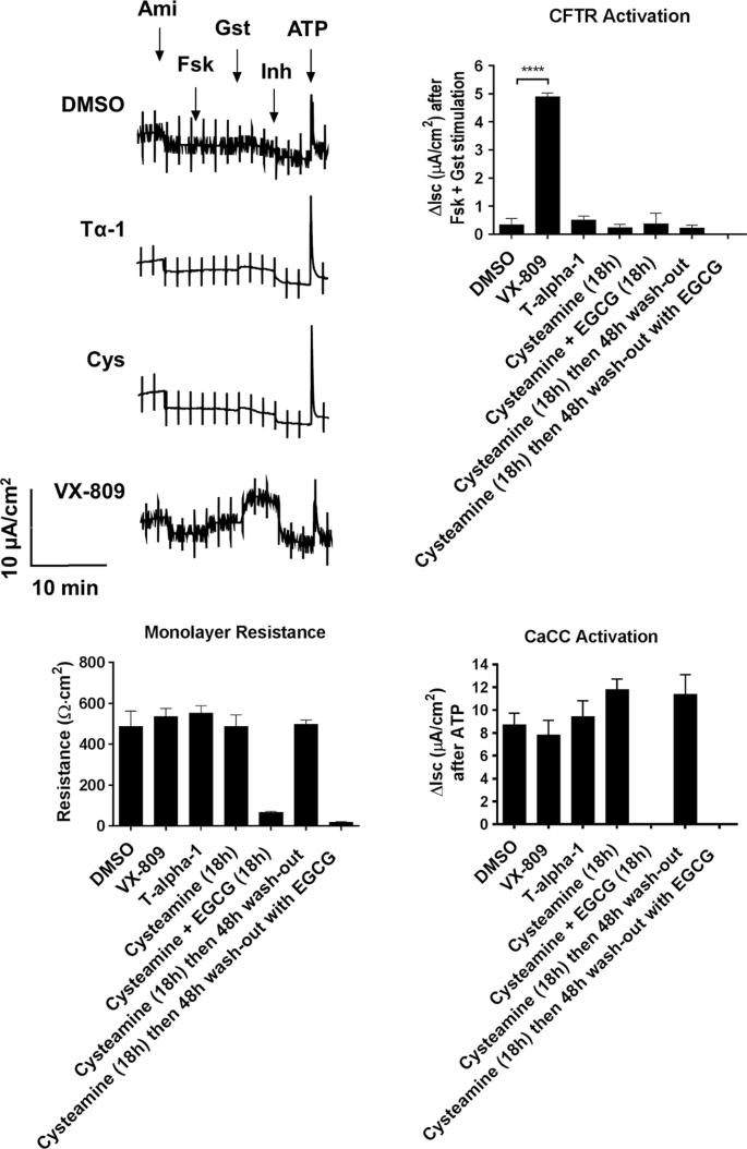 Bioactive Thymosin Alpha-1 Does Not Influence F508del-CFTR