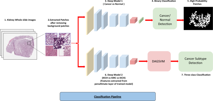 Pan Renal Cell Carcinoma Classification And Survival Prediction From Histopathology Images Using Deep Learning Scientific Reports