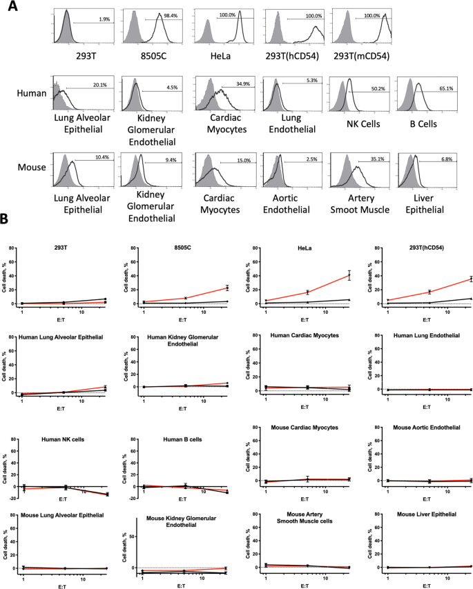 Manufacturing and preclinical validation of CAR T cells