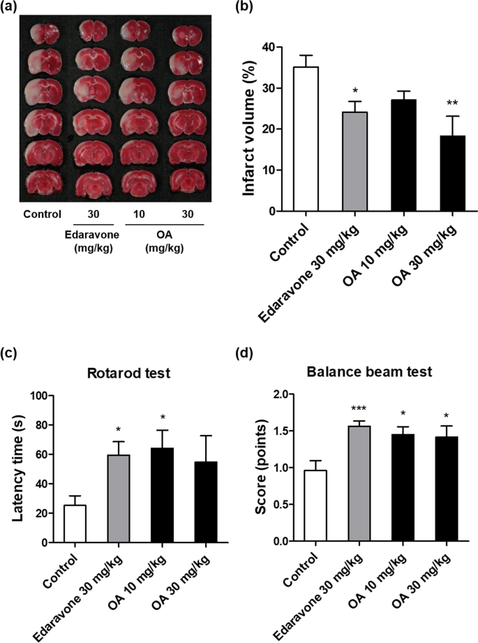 Neuroprotective effects of oleic acid in rodent models of cerebral