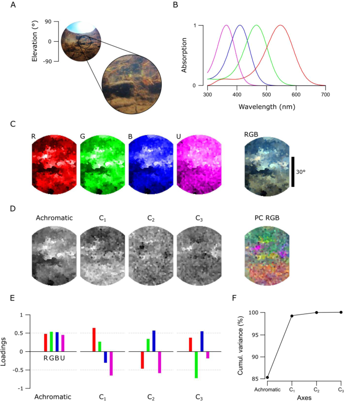 A low-cost hyperspectral scanner for natural imaging and the
