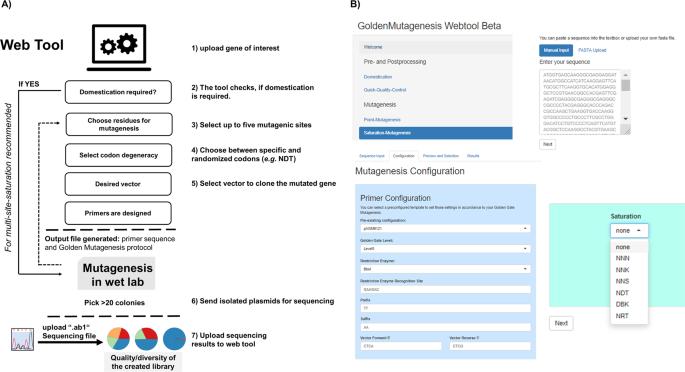 Golden Mutagenesis: An efficient multi-site-saturation