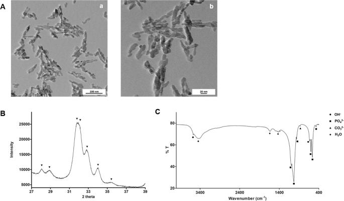 Nano-hydroxyapatite in oral care cosmetics: characterization and cytot