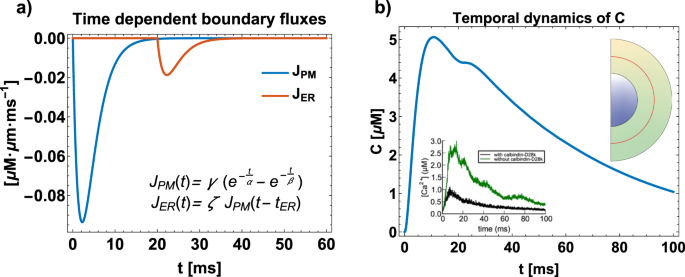 Geometric principles of second messenger dynamics in dendritic