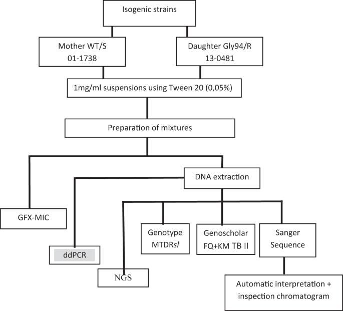Fluoroquinolone heteroresistance in Mycobacterium