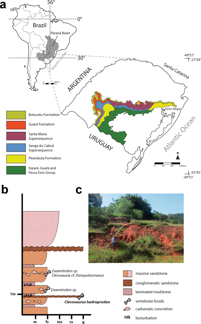 A New Clevosaurid from the Triassic (Carnian) of Brazil and the Rise o