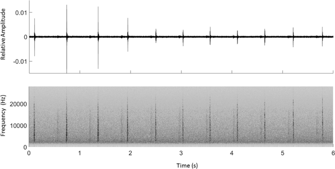 Foraging activity of sperm whales ( Physeter macrocephalus ) off the e