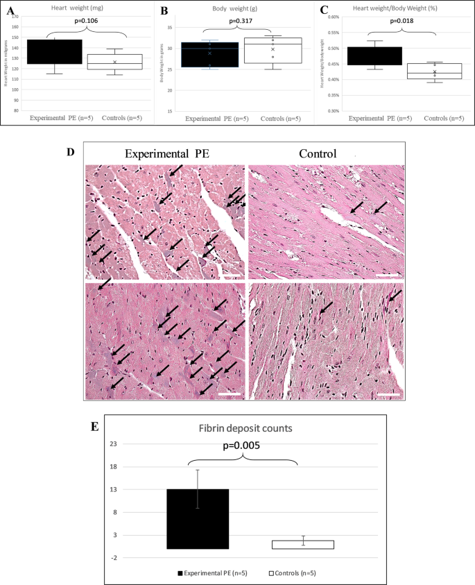 Long-term cardiovascular disorders in the STOX1 mouse model