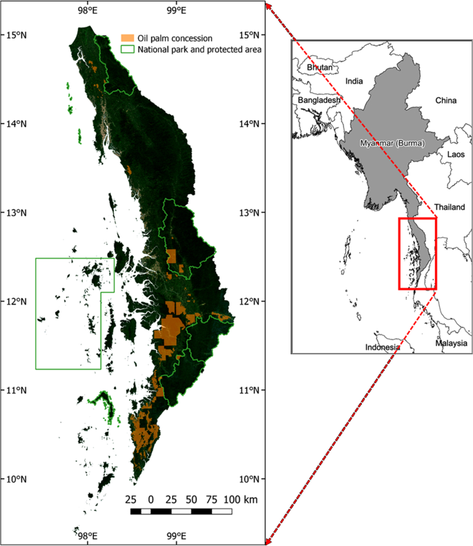 Oil palm concessions in southern Myanmar consist mostly of unconverted