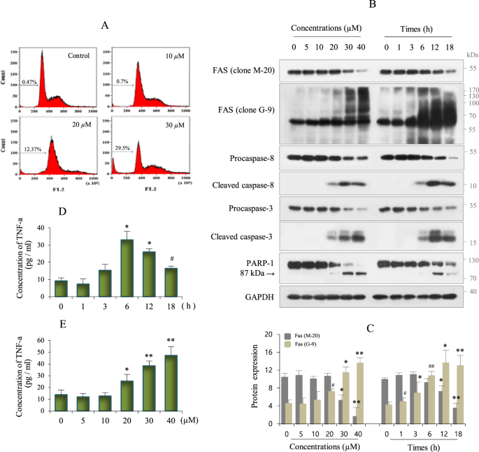 Polyubiquitination of p62/SQSTM1 is a prerequisite for Fas/CD95 aggreg