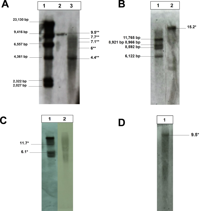 The horizontal gene transfer of Agrobacterium T-DNAs into