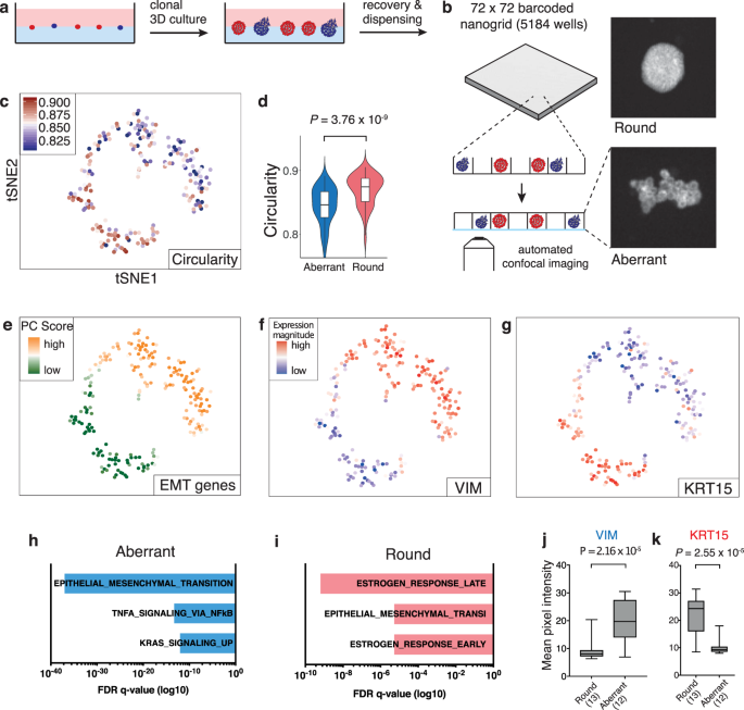 Pheno-seq – linking visual features and gene expression in 3D ce