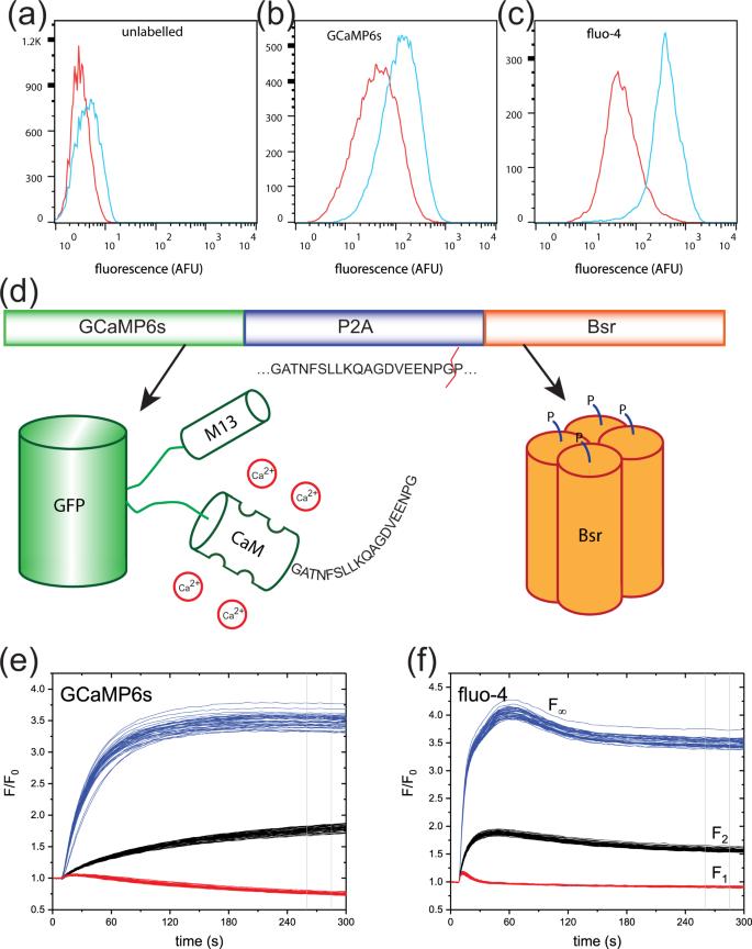 High-throughput-compatible assays using a genetically
