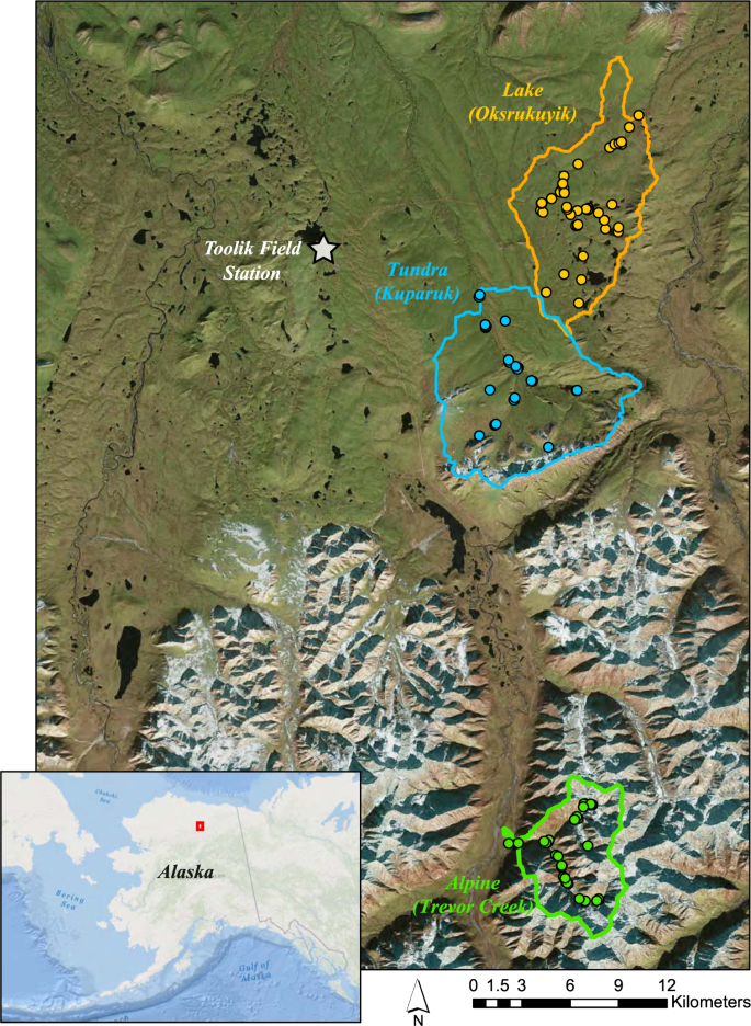 Revealing biogeochemical signatures of Arctic landscapes with river ch