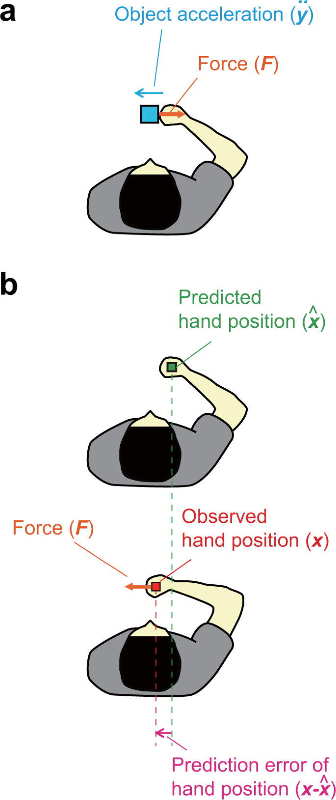 Better grip force control by attending to the controlled object: Evide