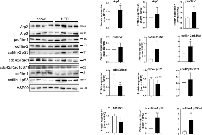Adipose cell size changes are associated with a drastic