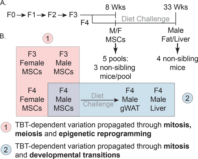 Transgenerational Self-Reconstruction of Disrupted Chromatin Organizat