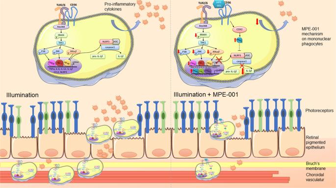 Immunometabolic modulation of retinal inflammation by CD36