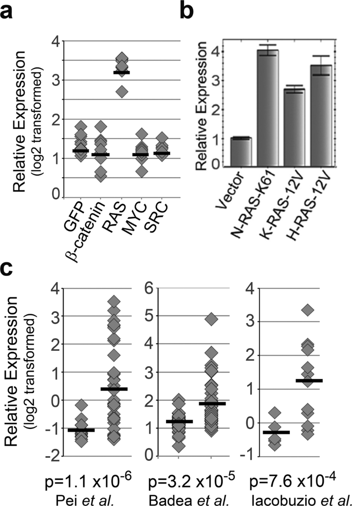 A FAM83A Positive Feed-back Loop Drives Survival and Tumorigenicity of