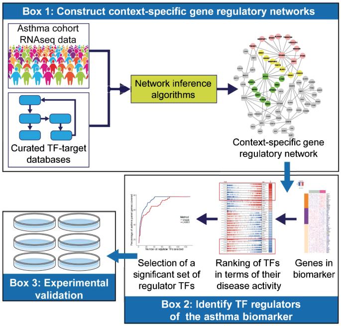 NeTFactor, a framework for identifying transcriptional regulators of g