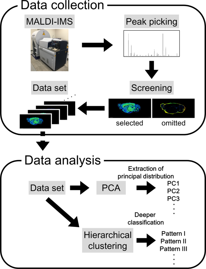 Unsupervised Machine Learning Using An Imaging Mass Spectrometry Dataset  Automatically Reassembles Grey And White Matter   Scientific Reports