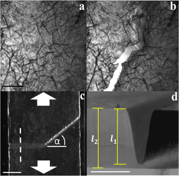 Embedding topography enables fracture guidance in soft solids
