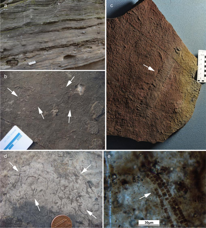 Early animal evolution and highly oxygenated seafloor niches hosted by