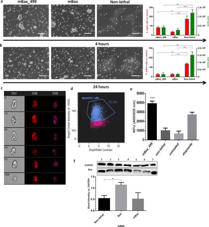 MiR-499 Responsive Lethal Construct for Removal of Human Embryonic Ste